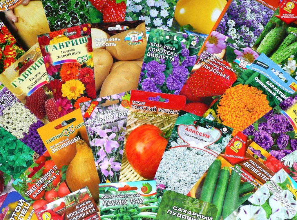 Виды семян - как выбрать качественные?