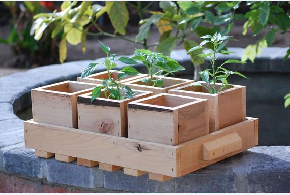 В качестве рассадных рекомендуется использовать деревянные или пластмассовые ящики размером 20x25 или 25x30 см и высотой 8-10 см. Именно такие ящики «украшают» наши подоконники либо устанавливаются в отапливаемой теплице