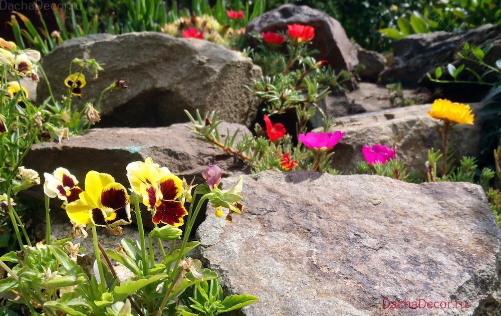 Условия жизни цветов для альпийской горки, по сравнению с грядками и клумбами, просто экстремальное: на солнце камни очень сильно и быстро нагреваются, в ночное время также быстро накопленное тепло отдают, а зимой альпинарий особенно остро ощущает снижение температуры.