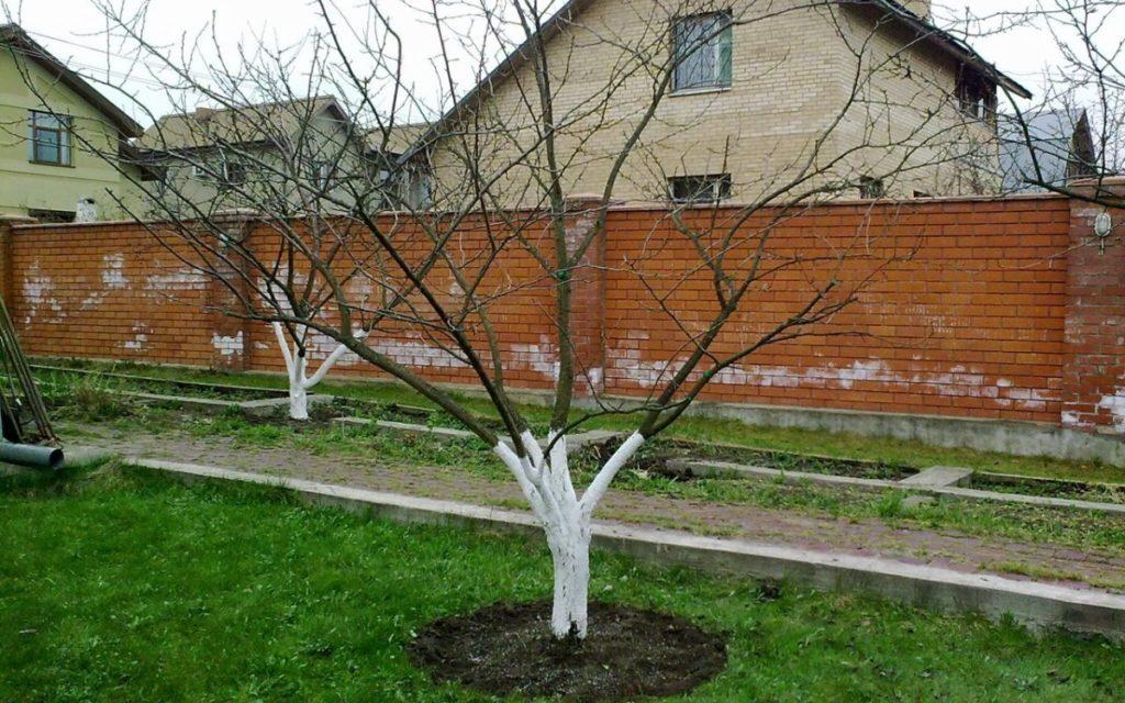 Одним из важных моментов ухода за деревьями является максимальная защита их коры от внешнего воздействия.