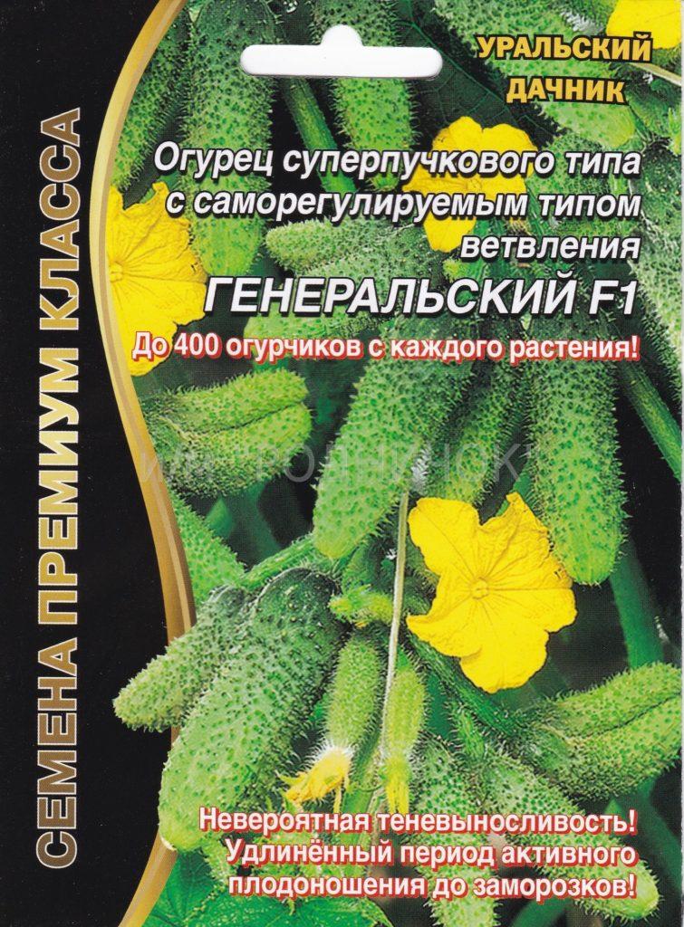 Огородникам Урала стоит обратить внимание на Генеральский F1 – устойчивость этого гибрида к мучнистым росам и капризам погоды просто феноменальна.