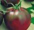 Томат Черный барон: описание, урожайность, фото и отзывы