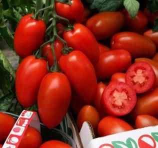 Томат «Сэр Элиан» F1: описание, урожайность, фото и отзывы