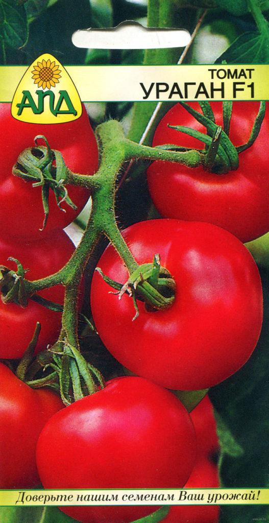 «Ураган F1» – раннеспелый гибрид с аккуратными плодами до 100 г в теплице и 40 в грунте. Индетерминантное растение, требует опоры и пасынкования, в отапливаемой теплице может плодоносить полный год, радуя огородника кистями сочных, мясистых помидоров.