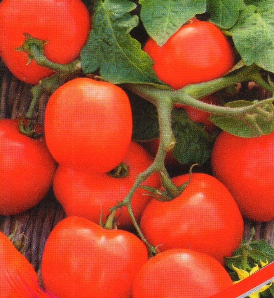 Совершенно неприхотлив к типу выращивания сорт «Увалень», который дает стабильный урожай как в грунте, так и в теплице. Детерминантный, однако сильно ветвящийся куст потребует подвязки, а в ответ порадует крупными округлыми помидорами около 150 г весом. Мясистый, выспевает за 100 дней.