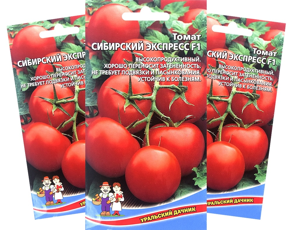 Скороспелый гибрид «Сибирский экспресс» хорош для тех, кто не любит долго ждать урожая.