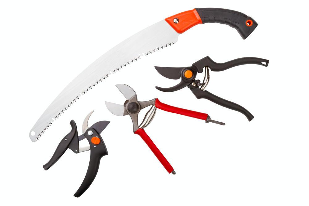 Инструменты для обрезки плодовых деревьев: секатор, садовый нож, сучкорезы (желательно модели со штангами разной длины) и садовые пилы.