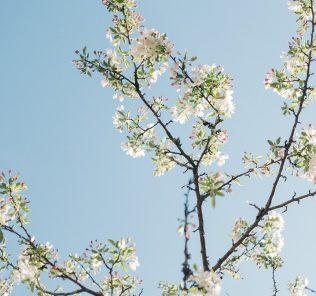 Вредители яблони: чем обработать весной чтобы не потерять урожай